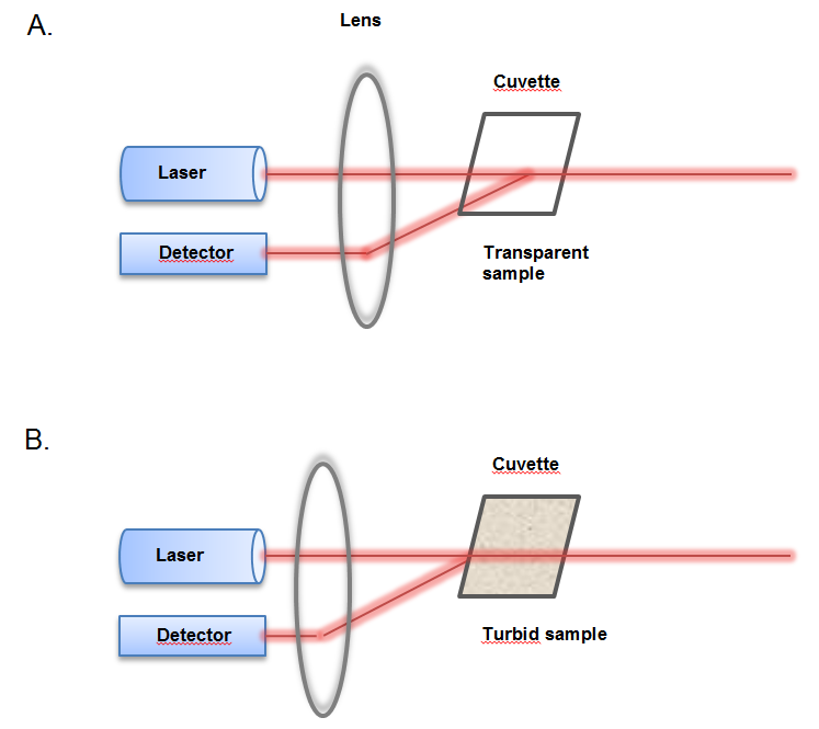 Schematic diagram showing the laser focus position for A) small, weakly scattering particles: the laser is focused in the middle of the cuvette, and for B) concentrated, turbid samples: the lens focuses the laser closer to the cuvette wall to shorten the path length of the photons that are detected and to reduce the chance of multiple scattering events.